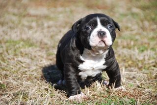CCK_Chance_NameNeededPuppy1_Feb2012