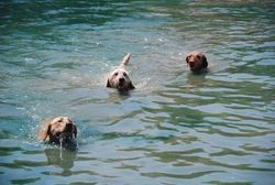 Haley, Raffi and Moose in pond