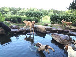 Waterfall pond party