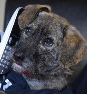 Barney Phone
