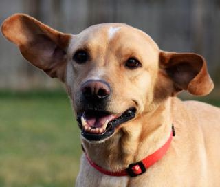 Chester ears!