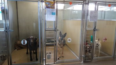Glass kennels