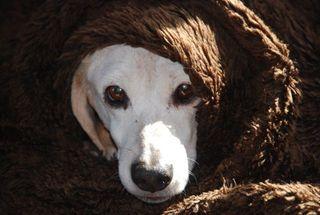 CCK_Hazel snug as a bug in a rug!