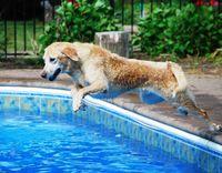 Jack pool 1