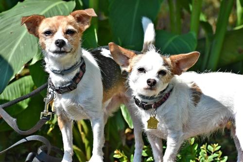 Sassy and Jaz